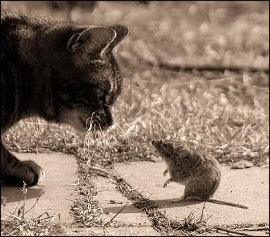 cat_mo10.jpg